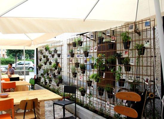 Social Club: Outside garden