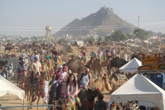 ‪بوشكار, الهند: camel Safari Pushkar fair‬