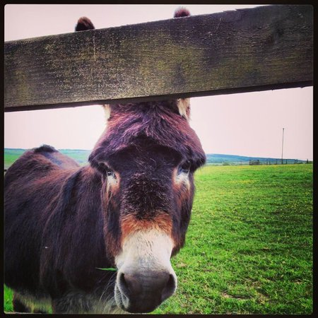 Muirhall Luxury Holiday Cottages: one of the faunal neighbours