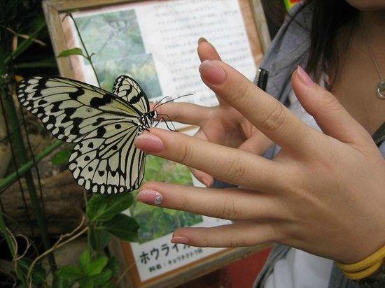 Ryugujo Butterfly Garden: 怖かったです・・・