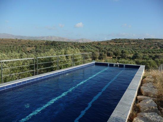 Niriida Guest House: Pool im Olivenhain