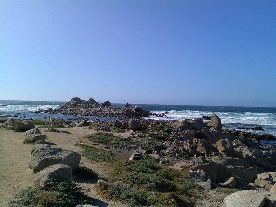 Sea Breeze Inn & Cottages: Pacific Grove