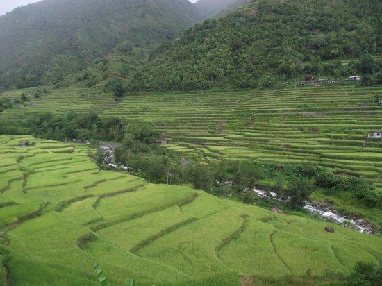 Hapao Rice Terraces: Rice terraces