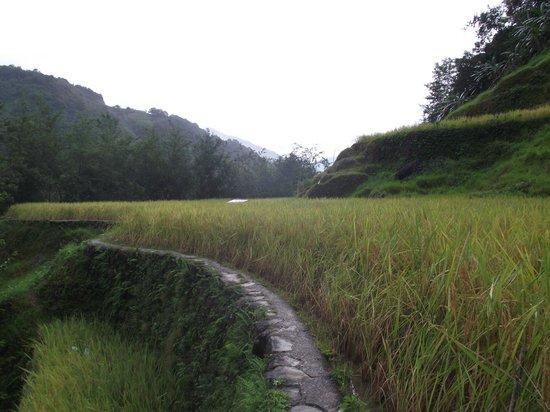 Hapao Rice Terraces: On the terraces