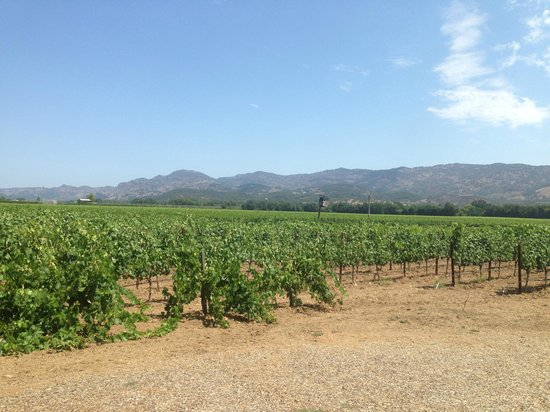 Robert Biale Vineyards: View from the tasting porch