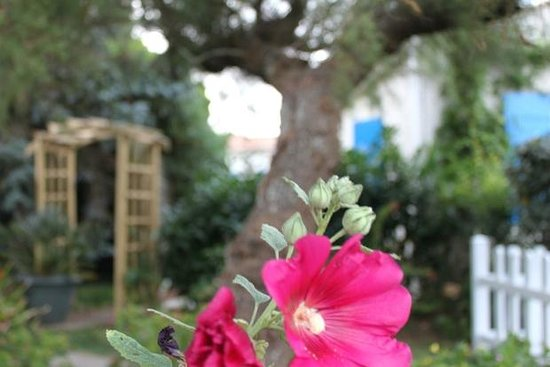 Hotel De La Plage : jardin