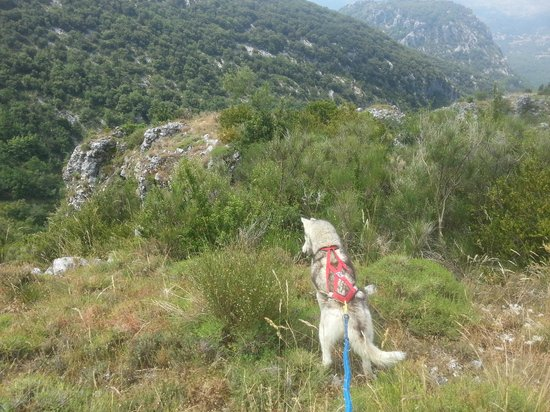 Alpes Maritimes, France: Canirando vers le Col de Vence avec Musher Experience