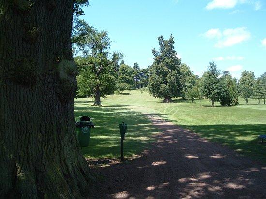 Patshull Park Hotel Golf & Country Club: Steve hit the tree wood