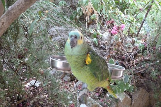Ciuci's Manor: the parrot