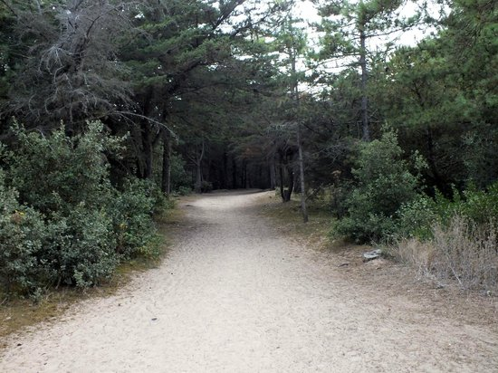 Camping La Forêt : The Path to the Beach