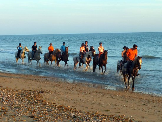 Camping La Forêt : Horseriding in the Evening