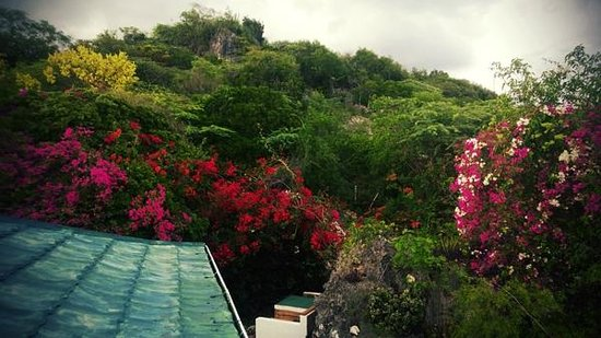 """Nuestra Casa"" Guesthouse : the beautiful garden"