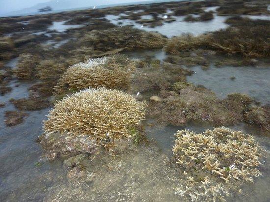 โรงแรมซิกซ์เซ้นส์เซสไฮด์อะเวย์นิญเวินเบย์: кораллы при отливе