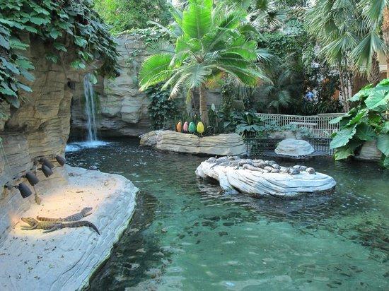 Gaylord Palms Resort & Convention Center: Gator Springs