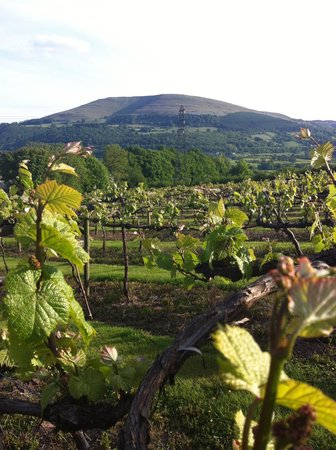 The Sugarloaf Vineyard