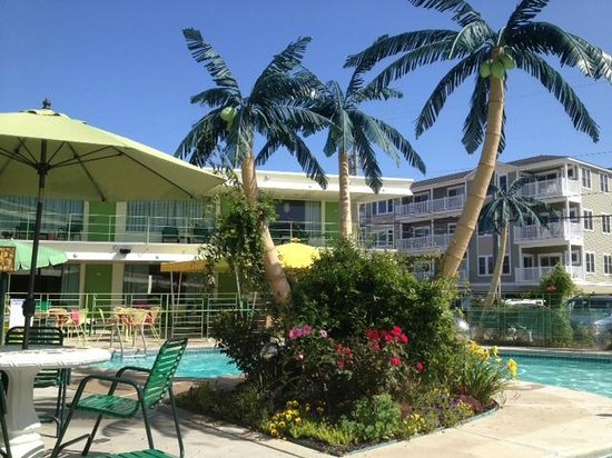Caribbean Motel: view of of the pool and palm trees (and one half of the motel)
