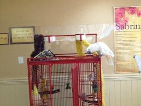 Ramada Plaza Nags Head Oceanfront: Sabrina the resident bird at the Ramada Nags Head
