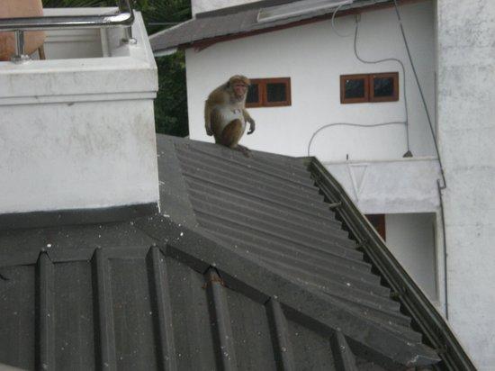 Oak Ray Serene Garden Hotel: Een aap op het dak, vanaf het balkon gezien..!!
