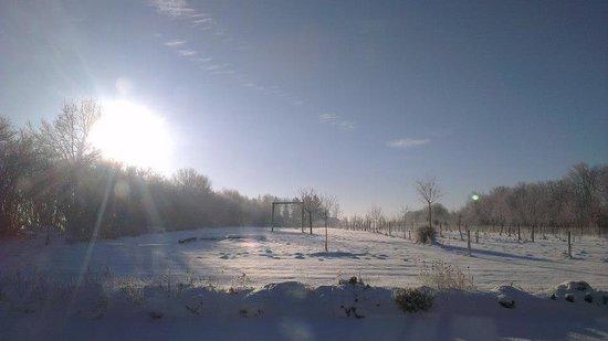 Petite-Chapelle, Belgique : Garden in the winter