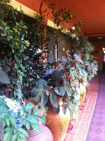 Stanford Terrace Inn: Yes, more plants - they are everywhere!