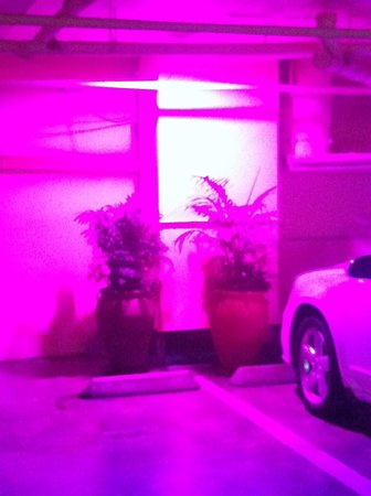 Stanford Terrace Inn: Weird pink lights (and more plants) in the parking garage
