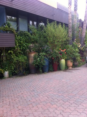 Stanford Terrace Inn: More plants outside as you pull up.