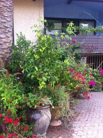 Stanford Terrace Inn: more plants