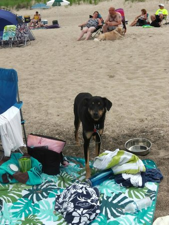 Warren Dunes State Park: Nice to be able to bring our pup to the beach with us.
