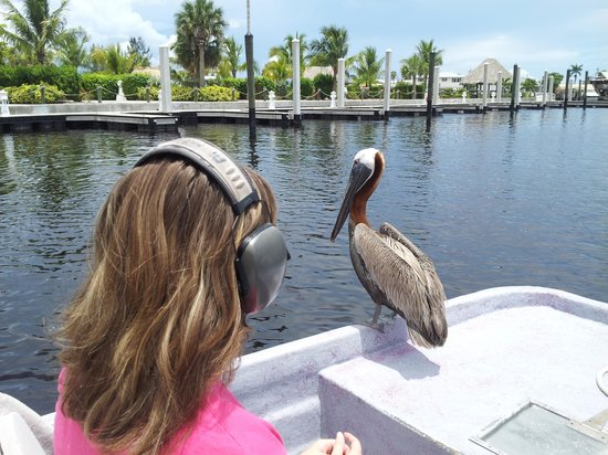 Air Boat USA: Pete the pelican dropped in