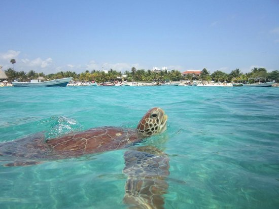 View Of Akumal Beach From The Water Turtle Watching