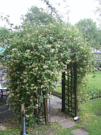 School House Cottage: Beautiful Honeysuckle Arch
