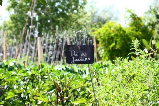Le jardin potager photo de la chassagnette arles for Le jardin potager