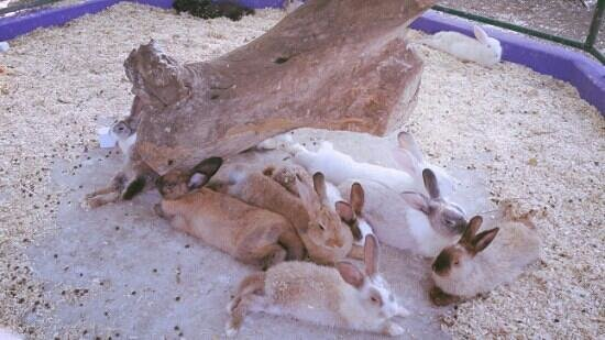 Curacao Zoo & Nature Reserve : bunny's