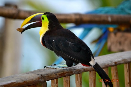 Hacienda del Mar: Toucan