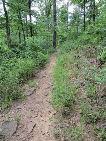 Ozark Mountains: Trail to Pedestal Rock in AR