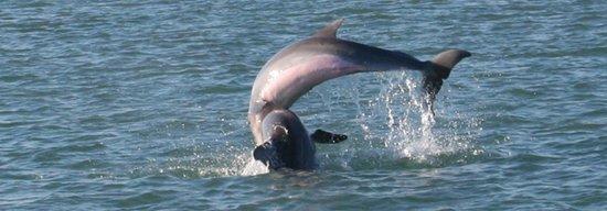 Port Isla Inn: dolphin
