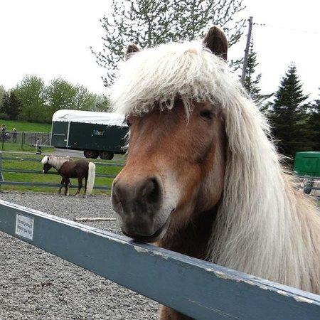 Reykjavik, Iceland: Horse