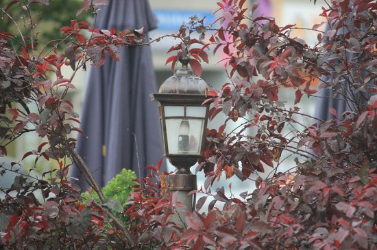 Cork Restaurant: Charming light with a red maple (?) decoration