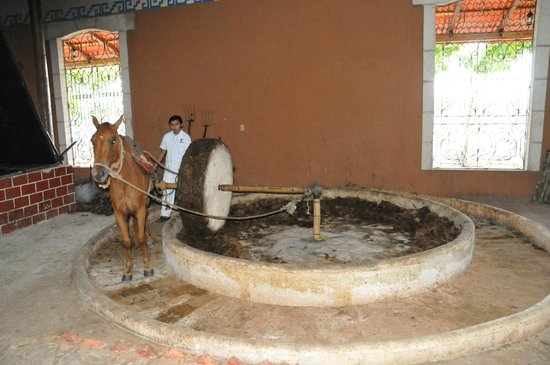 Mayapan Traditional Agave Distillery : inside the distillery