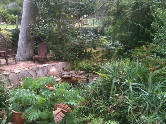 Possum Creek Lodge : The Pond
