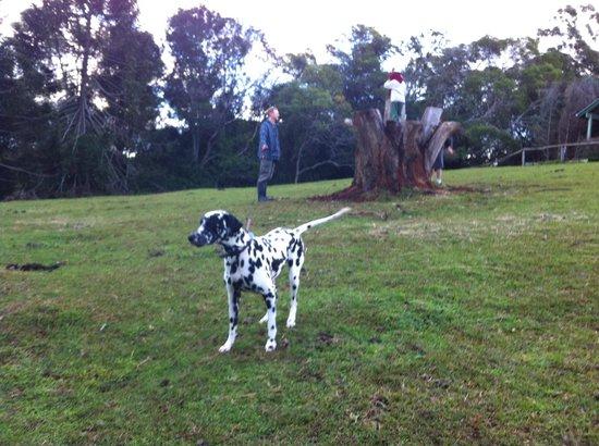 Brockhurst Farm: Spot