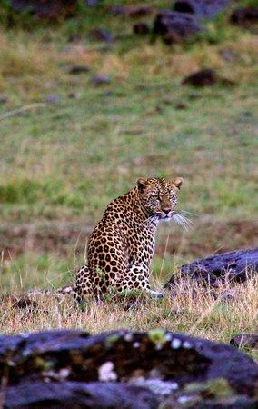 Karen Blixen Camp: We were lucky enough to see a leopard!