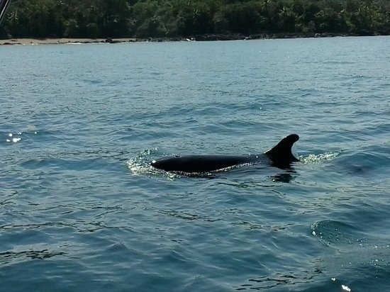 Drake Bay, Costa Rica: orca falsa