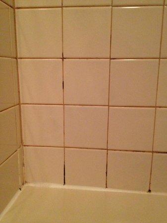 Harborview Inn : mildew on the tiles