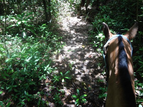Cotton Tree Lodge: Horseback riding through the jungle
