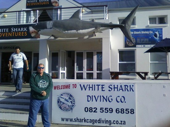 White Shark Diving Company: In front of the office