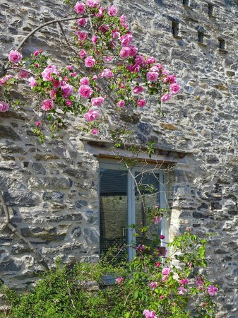 Blackler Barton House : View of window and climbing rose