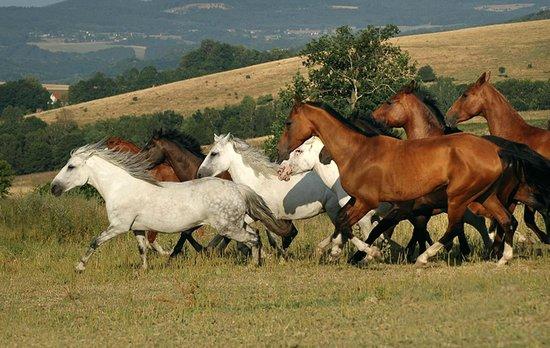 Hotel Farma Vysoka: our horses
