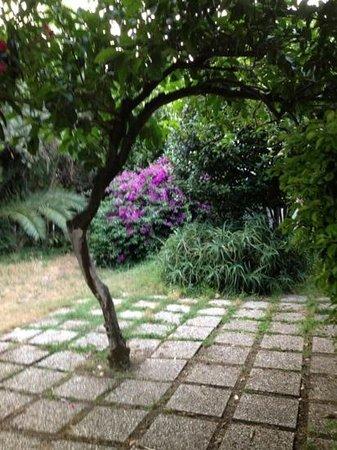 Hotel Residence Tirreno : il giardino