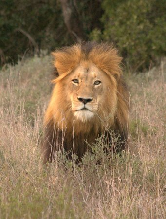 Woodbury Tented Camp, Amakhala Game Reserve: Wildlife